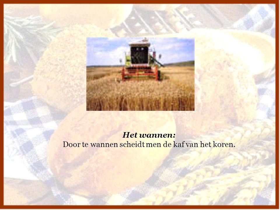 Het wannen: Door te wannen scheidt men de kaf van het koren.