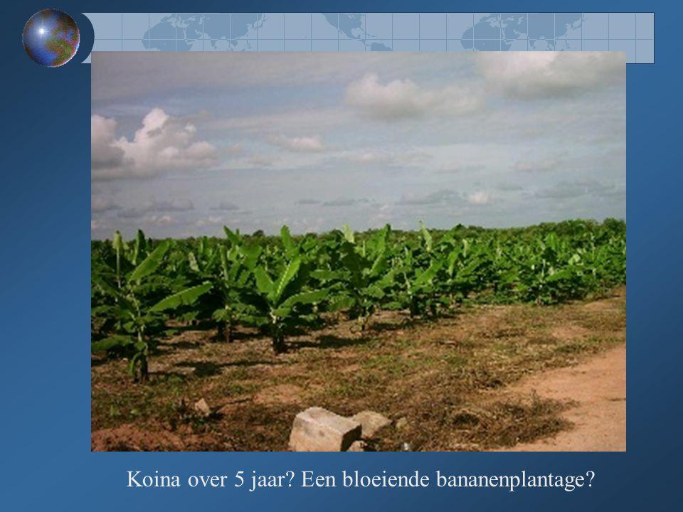 Koina over 5 jaar? Een bloeiende bananenplantage?