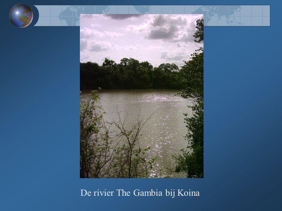 De rivier The Gambia bij Koina