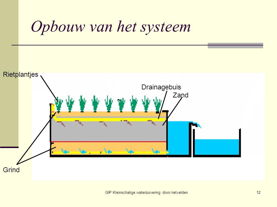 GIP Kleinschalige waterzuivering door rietvelden12 Opbouw van het systeem Rietplantjes Drainagebuis Zand Grind