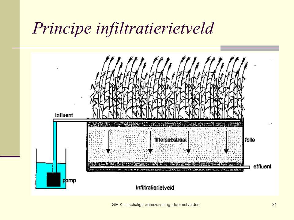 GIP Kleinschalige waterzuivering door rietvelden21 Principe infiltratierietveld