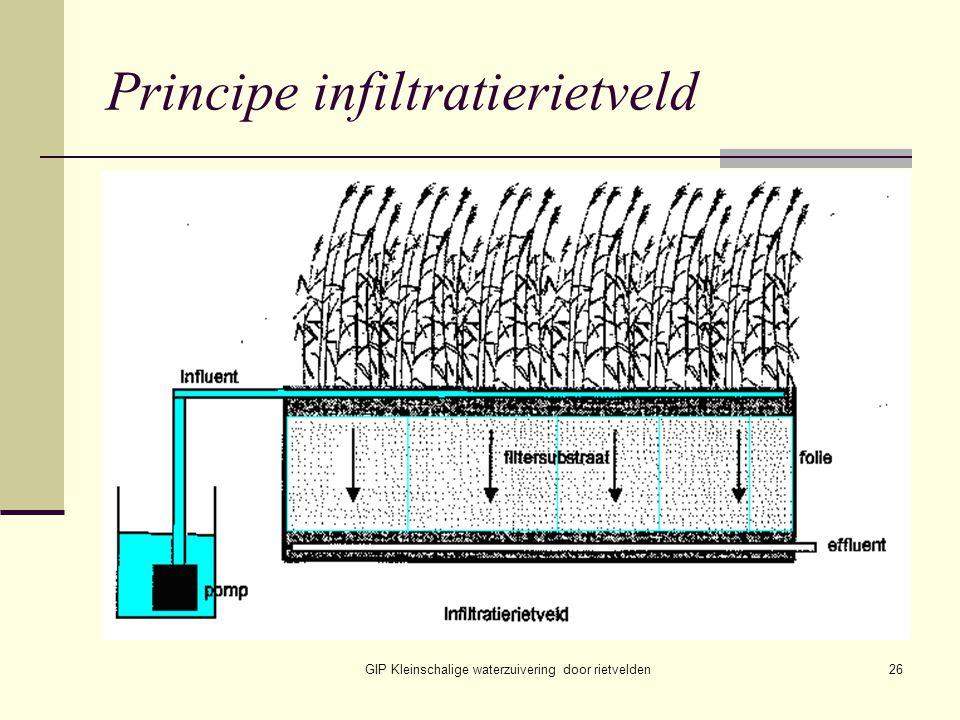 GIP Kleinschalige waterzuivering door rietvelden26 Principe infiltratierietveld