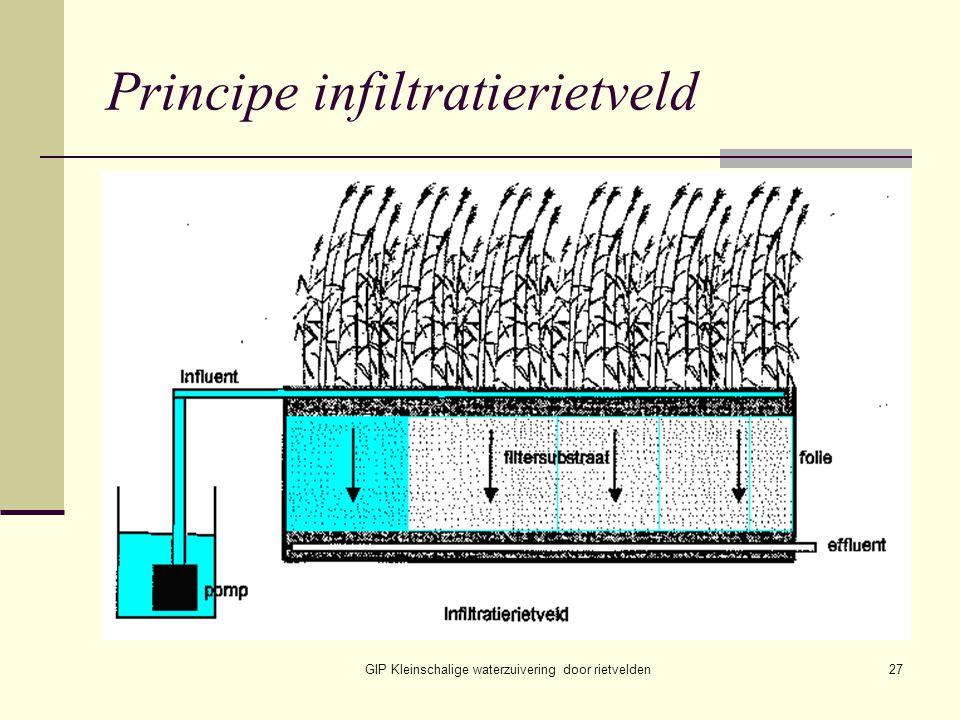 GIP Kleinschalige waterzuivering door rietvelden27 Principe infiltratierietveld