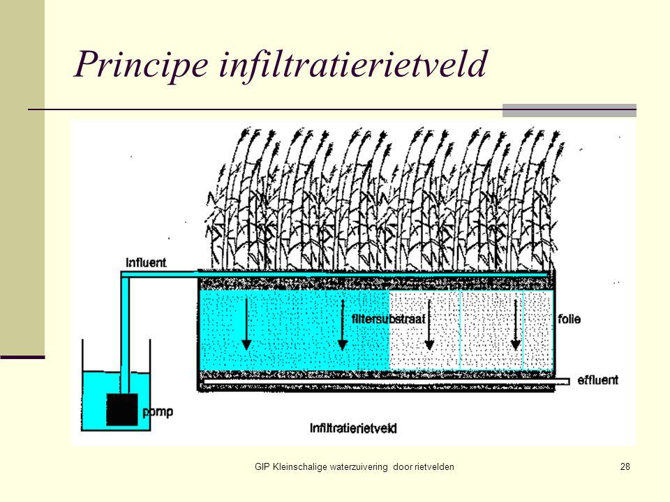 GIP Kleinschalige waterzuivering door rietvelden28 Principe infiltratierietveld