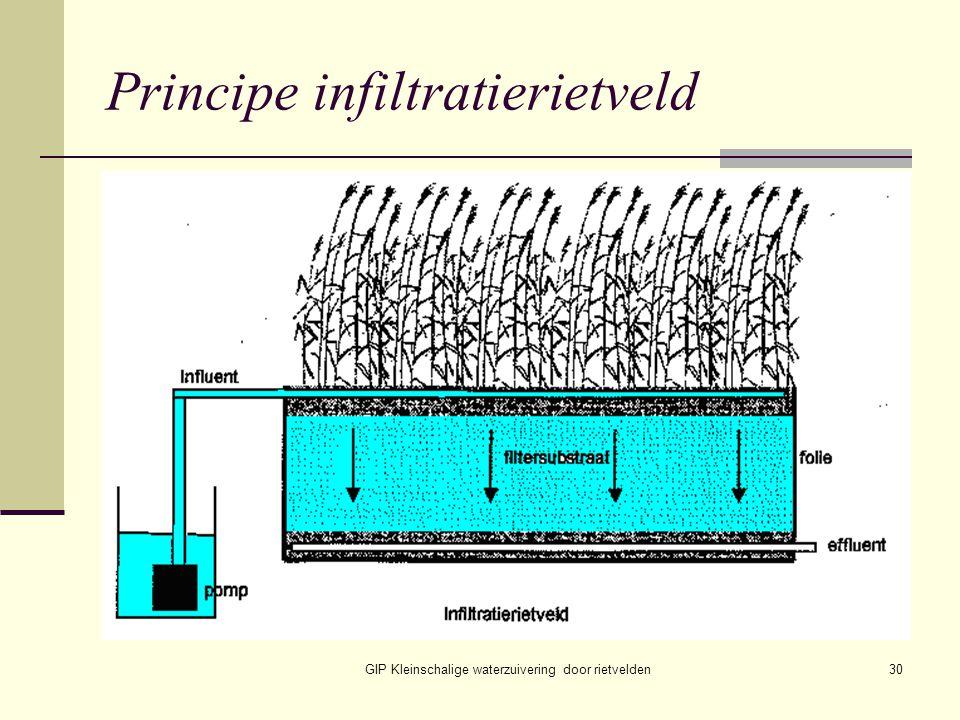 GIP Kleinschalige waterzuivering door rietvelden30 Principe infiltratierietveld