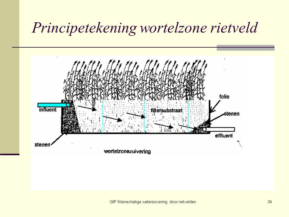 GIP Kleinschalige waterzuivering door rietvelden34 Principetekening wortelzone rietveld