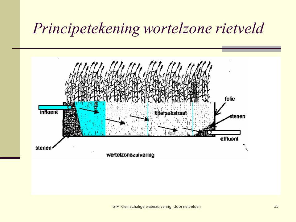 GIP Kleinschalige waterzuivering door rietvelden35 Principetekening wortelzone rietveld
