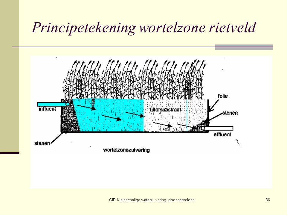 GIP Kleinschalige waterzuivering door rietvelden36 Principetekening wortelzone rietveld