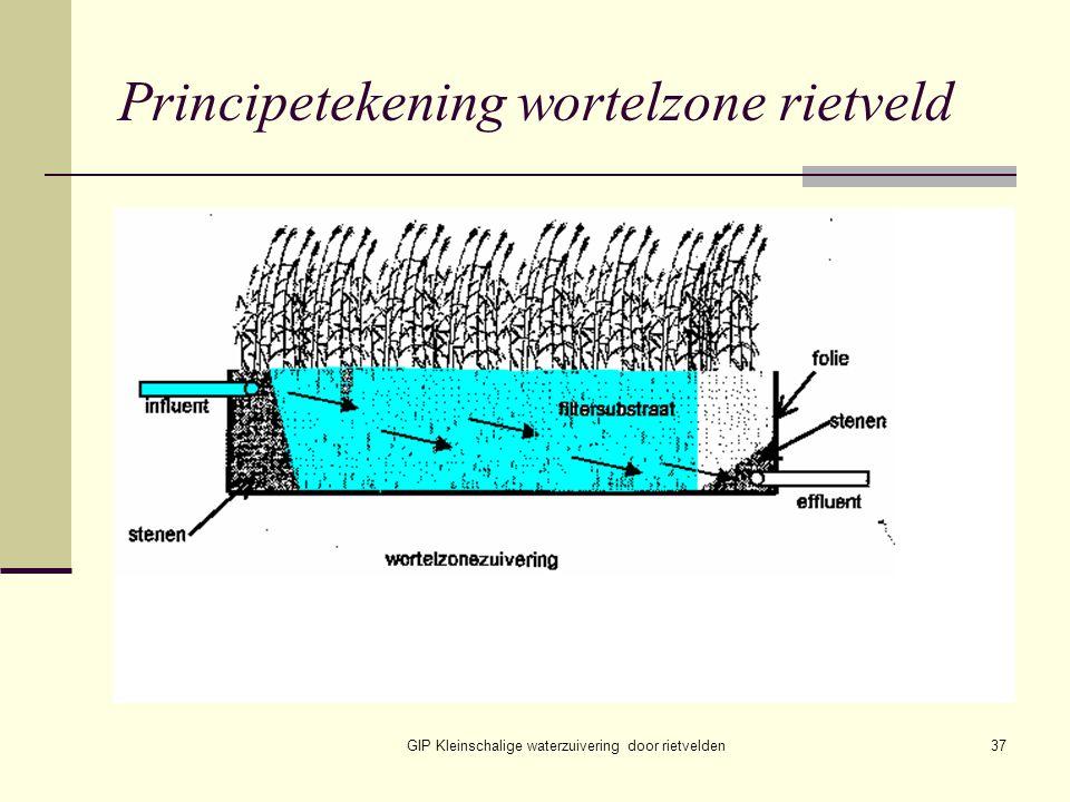 GIP Kleinschalige waterzuivering door rietvelden37 Principetekening wortelzone rietveld