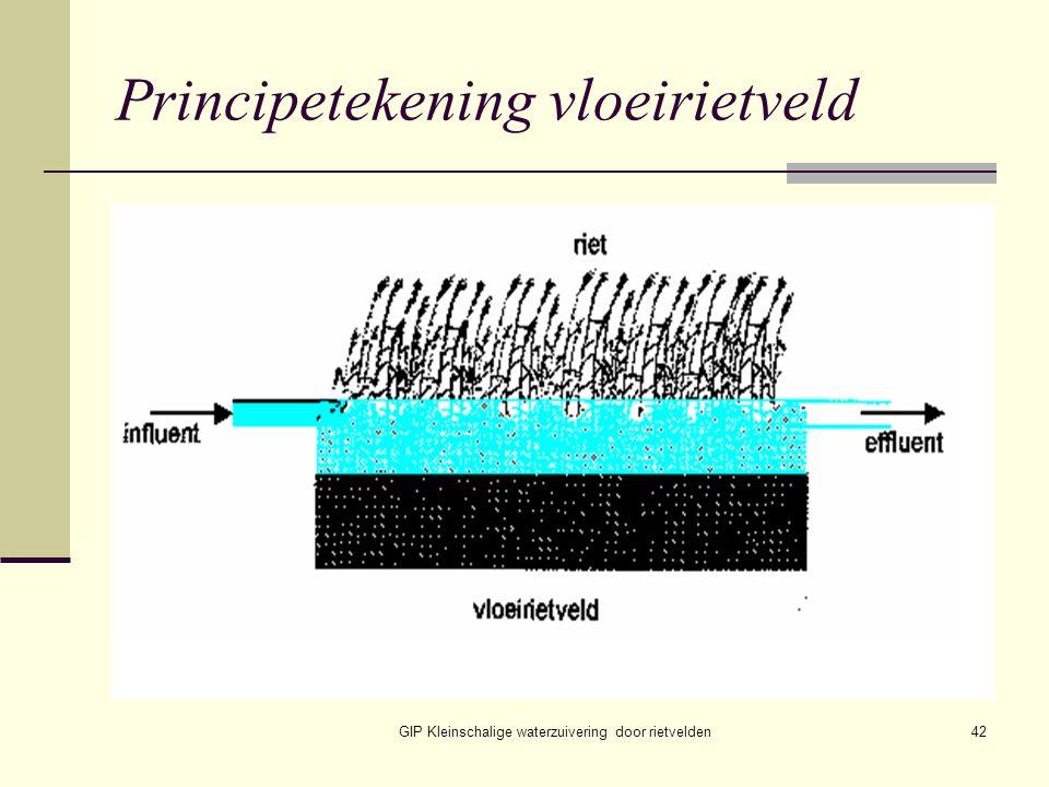 GIP Kleinschalige waterzuivering door rietvelden42 Principetekening vloeirietveld