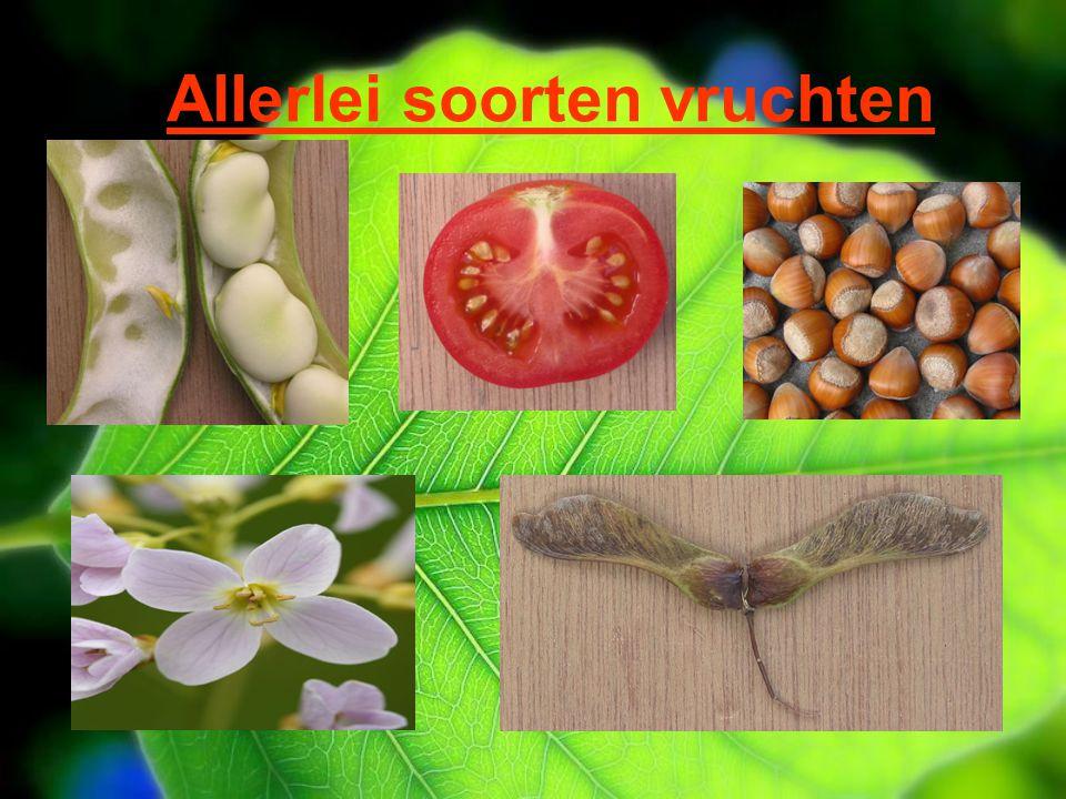 Allerlei soorten vruchten De peul