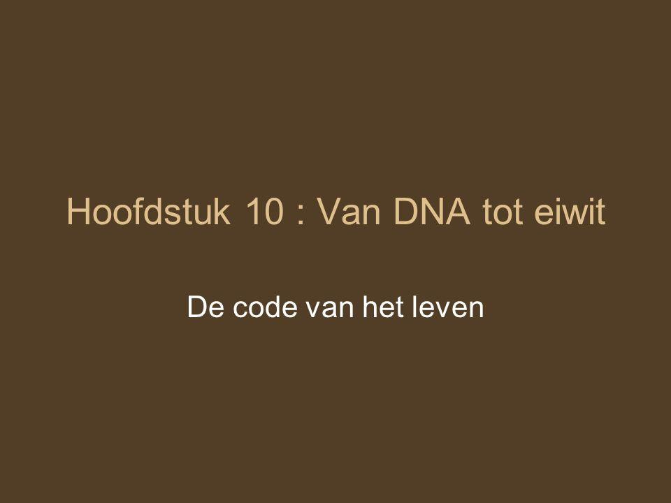 Hoofdstuk 10 : Van DNA tot eiwit De code van het leven