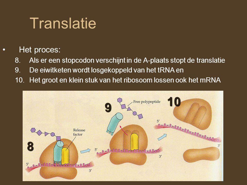 Translatie Het proces: 8.Als er een stopcodon verschijnt in de A-plaats stopt de translatie 9.De eiwitketen wordt losgekoppeld van het tRNA en 10.Het