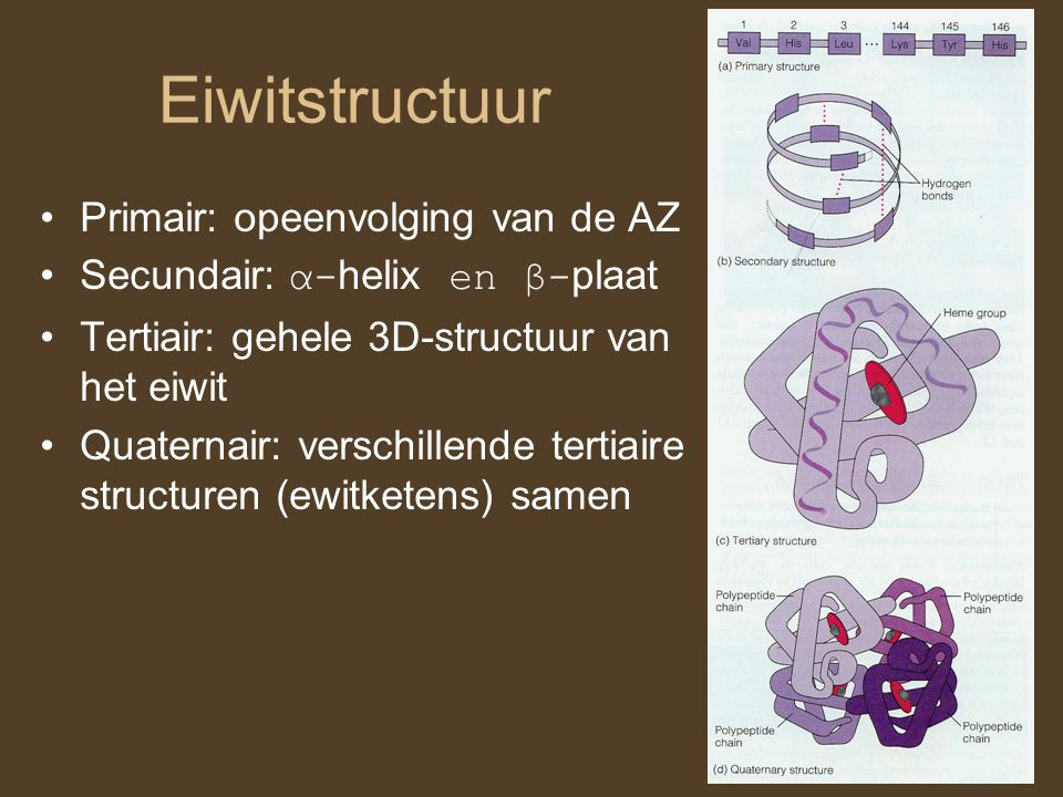 Eiwitstructuur Primair: opeenvolging van de AZ Secundair: α- helix en β- plaat Tertiair: gehele 3D-structuur van het eiwit Quaternair: verschillende t
