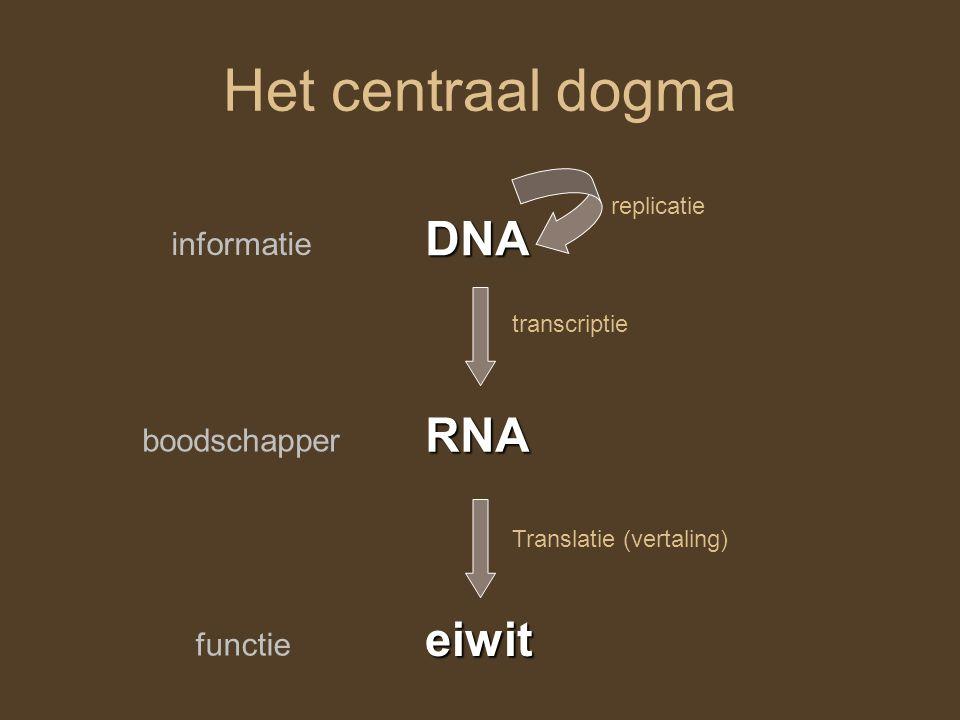 Het centraal dogma DNA RNA eiwit replicatie transcriptie Translatie (vertaling) informatie boodschapper functie