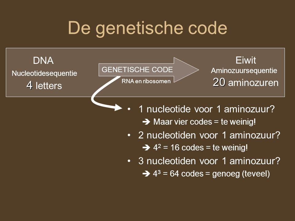 De genetische code DNA Nucleotidesequentie 4 4 letters Eiwit Aminozuursequentie 20 20 aminozuren GENETISCHE CODE 1 nucleotide voor 1 aminozuur?  Maar