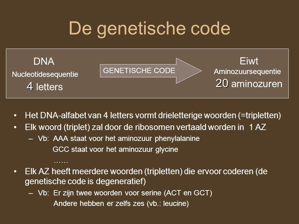 De genetische code DNA Nucleotidesequentie 4 4 letters Eiwt Aminozuursequentie 20 20 aminozuren GENETISCHE CODE Het DNA-alfabet van 4 letters vormt dr
