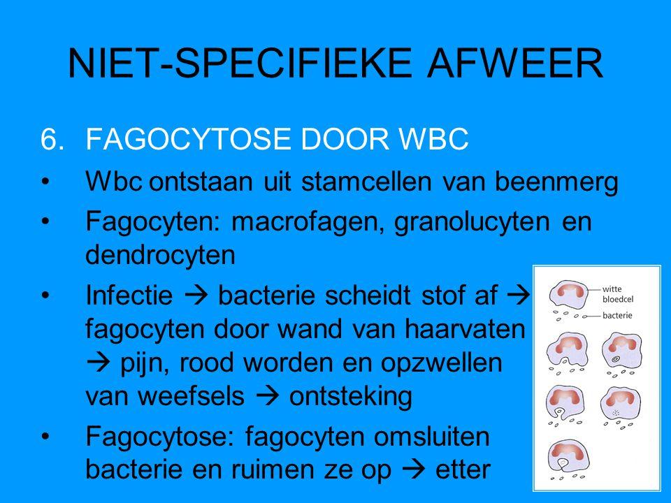 NIET-SPECIFIEKE AFWEER 6.FAGOCYTOSE DOOR WBC Wbc ontstaan uit stamcellen van beenmerg Fagocyten: macrofagen, granolucyten en dendrocyten Infectie  ba