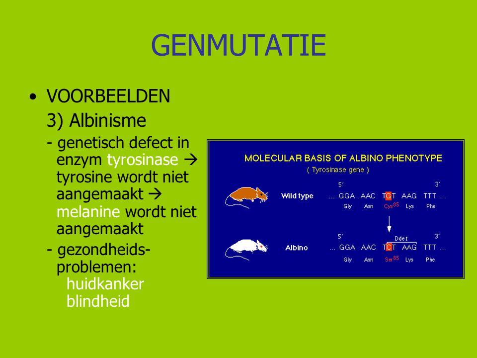 GENMUTATIE VOORBEELDEN 3) Albinisme - genetisch defect in enzym tyrosinase  tyrosine wordt niet aangemaakt  melanine wordt niet aangemaakt - gezondh