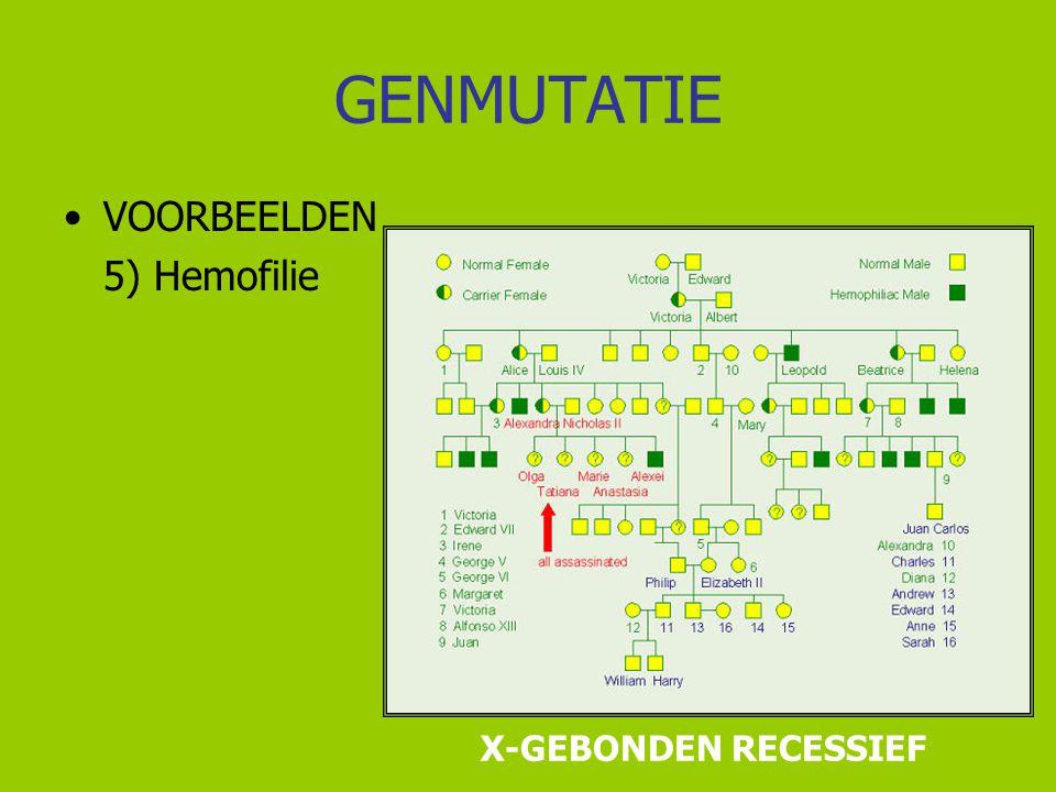 GENMUTATIE VOORBEELDEN 5) Hemofilie X-GEBONDEN RECESSIEF