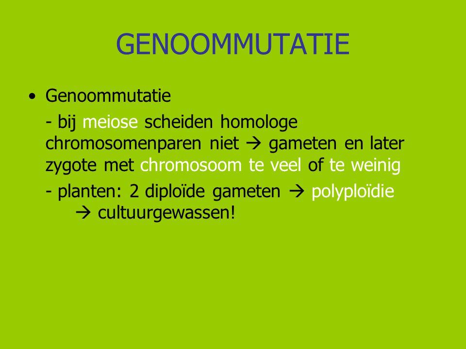 GENOOMMUTATIE Genoommutatie - bij meiose scheiden homologe chromosomenparen niet  gameten en later zygote met chromosoom te veel of te weinig - plant