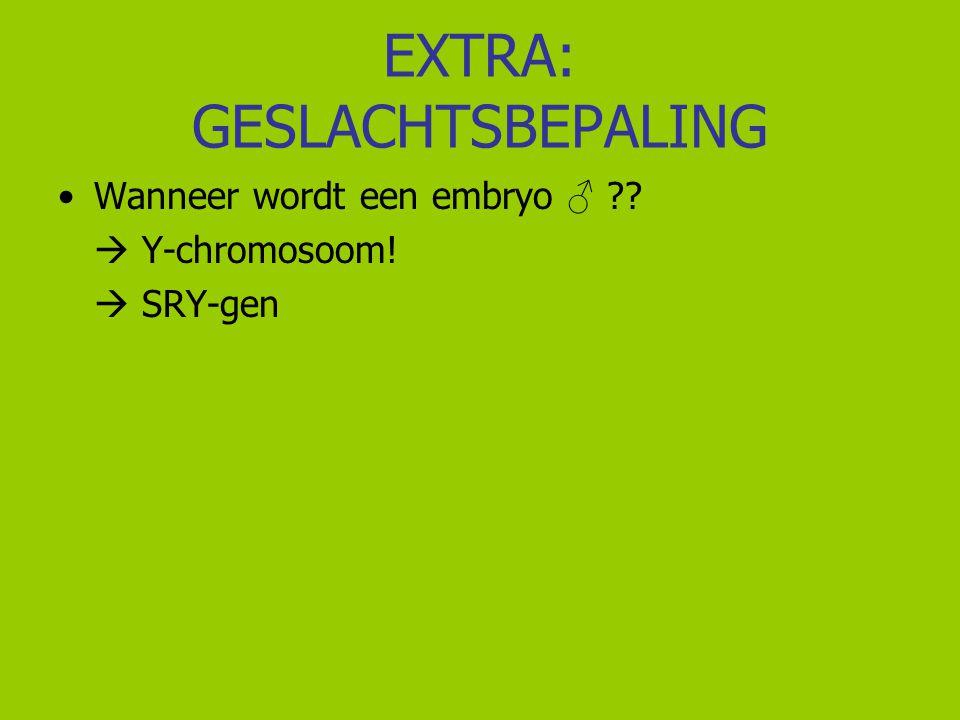 EXTRA: GESLACHTSBEPALING Wanneer wordt een embryo ♂ ??  Y-chromosoom!  SRY-gen