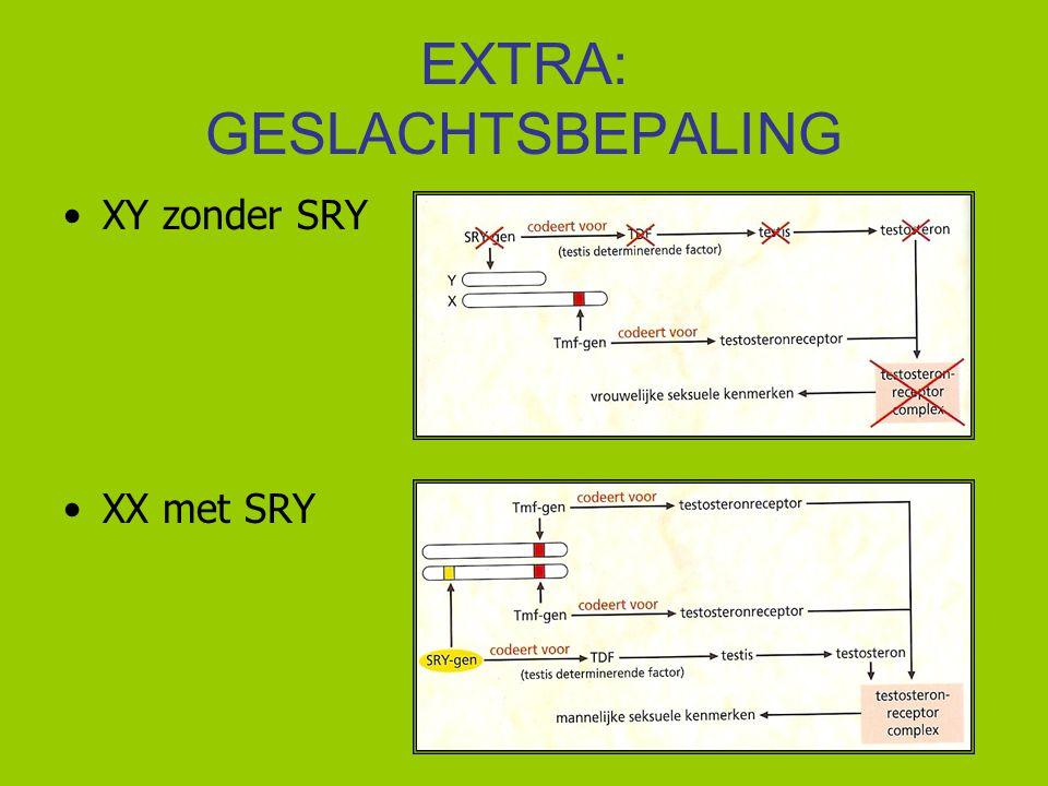 EXTRA: GESLACHTSBEPALING XY zonder SRY XX met SRY
