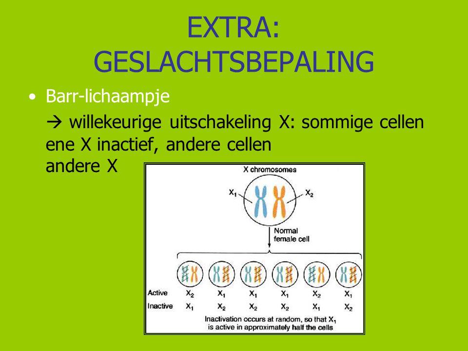 EXTRA: GESLACHTSBEPALING Barr-lichaampje  willekeurige uitschakeling X: sommige cellen ene X inactief, andere cellen andere X