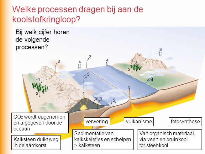fotosynthese Van organisch materiaal, via veen en bruinkool tot steenkool vulkanisme verwering Kalksteen duikt weg in de aardkorst Sedimentatie van kalkskeletjes en schelpen > kalksteen CO 2 wordt opgenomen en afgegeven door de oceaan Welke processen dragen bij aan de koolstofkringloop?