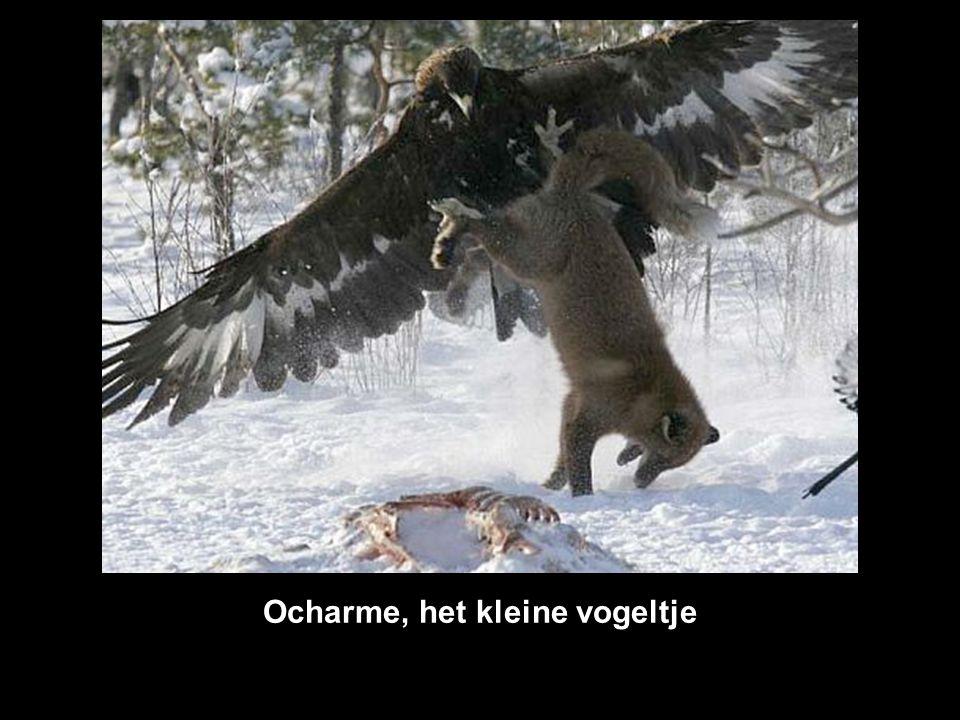 Ocharme, het kleine vogeltje