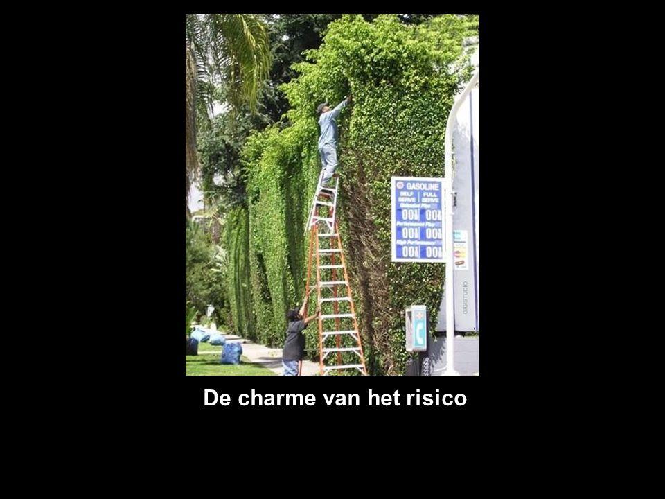 De charme van het risico