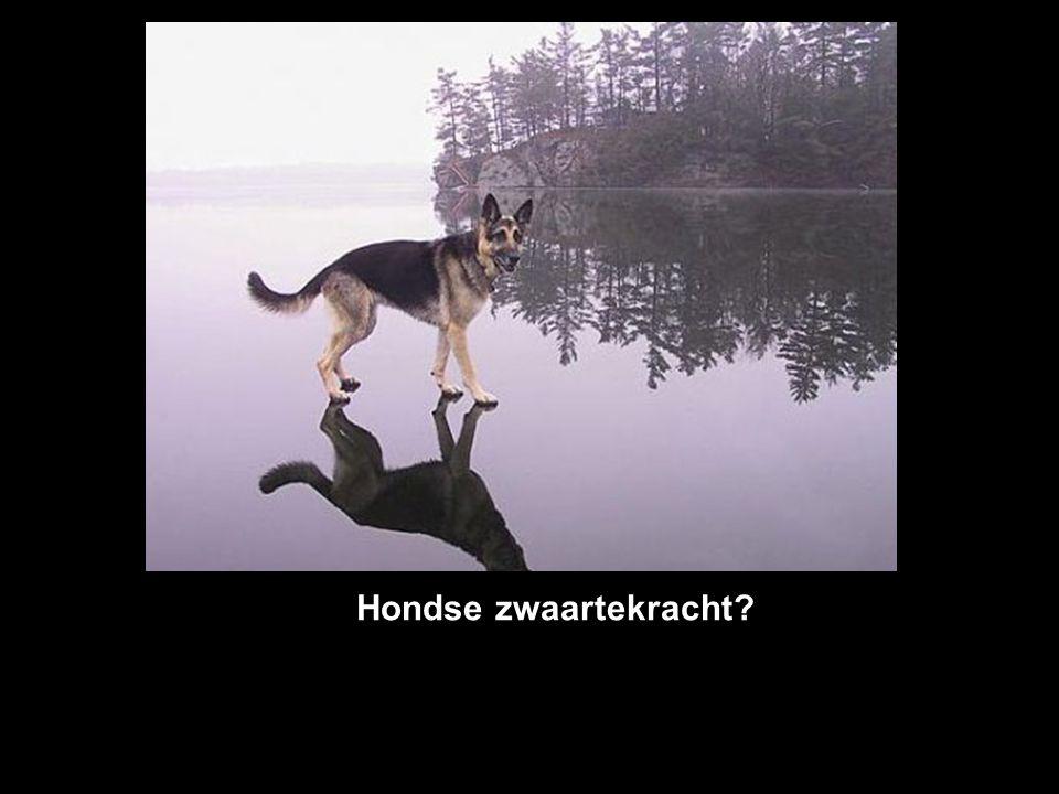 Hondse zwaartekracht?
