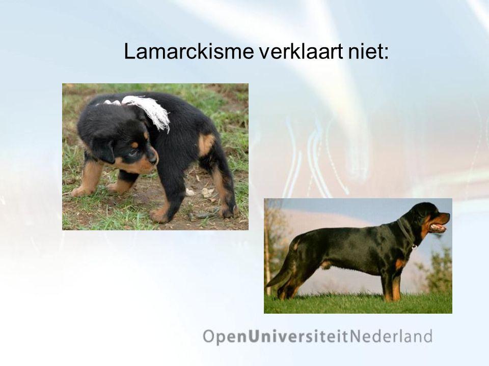 Lamarckisme verklaart niet: