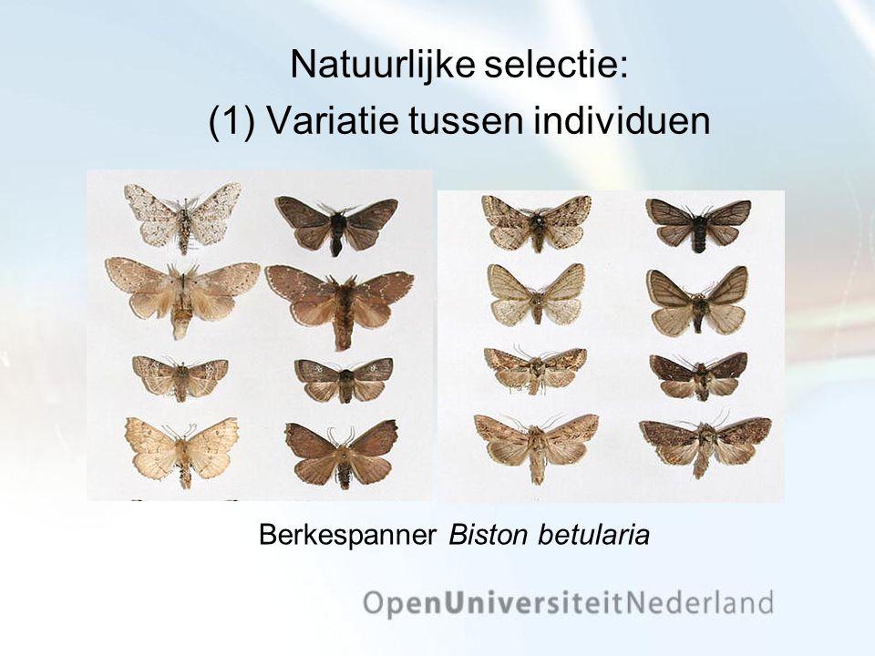 Natuurlijke selectie: (1) Variatie tussen individuen Berkespanner Biston betularia