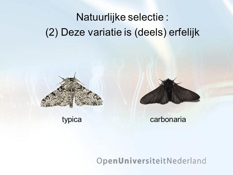 Natuurlijke selectie : (2) Deze variatie is (deels) erfelijk typicacarbonaria