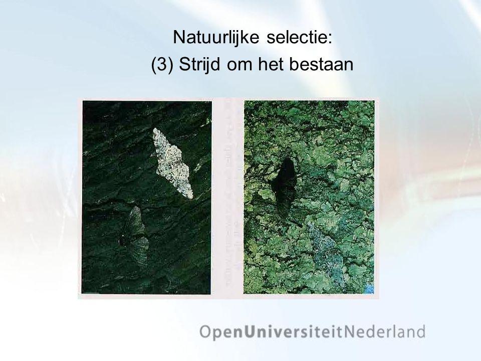 Natuurlijke selectie: (3) Strijd om het bestaan
