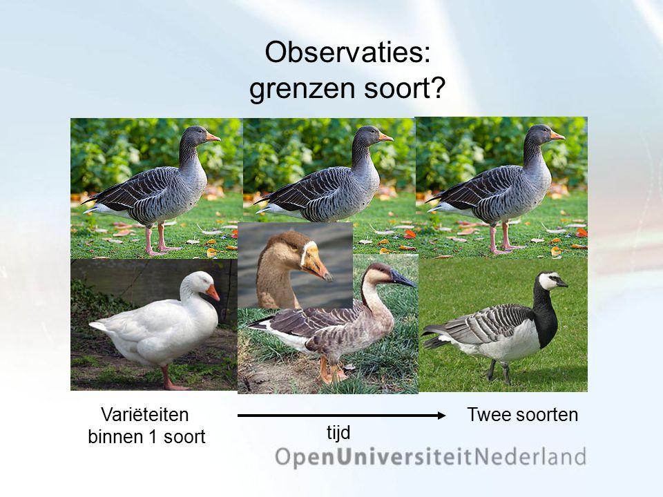 Observaties: grenzen soort? Variëteiten binnen 1 soort Twee soorten tijd