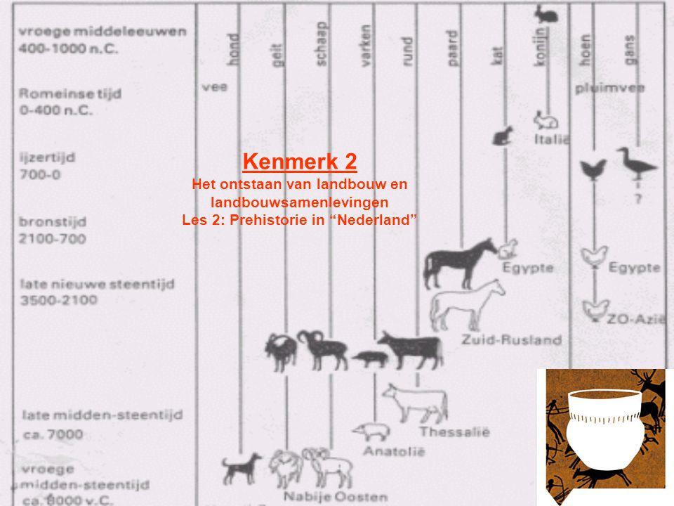 Bewoning tot aan het eind van de IJstijd Tot aan de laatste IJstijd werd ons gebied wisselt bevolkt door groepen j/v –Sporadische bewoning –Sporen Stenen werktuigen uit Rhenen (Veluwe) van 200.000-150.000 jaar oud Stenen werktuigen uit de Belvedère groeve te Maastricht van 250.000- 200.000 jaar oud Links: recent bij Ootmarsum gevonden Neanderthaler vuistbijl (90.000 - 40.000) Kampplaatsen van jagers van ca.