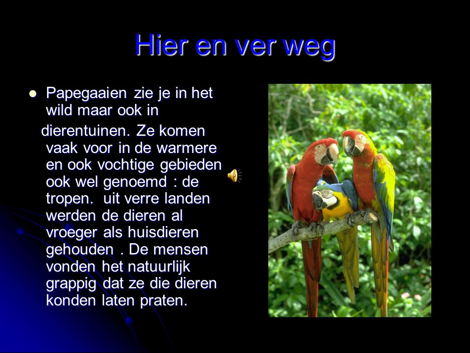 Hier en ver weg Papegaaien zie je in het wild maar ook in Papegaaien zie je in het wild maar ook in dierentuinen. Ze komen vaak voor in de warmere en