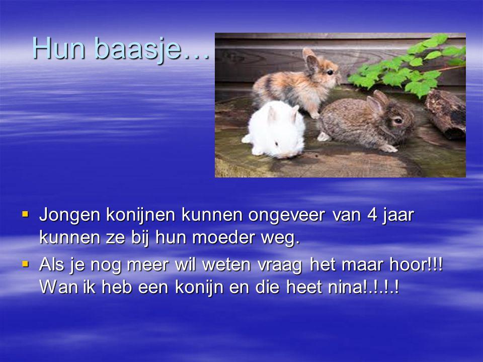 Hun baasje…  Jongen konijnen kunnen ongeveer van 4 jaar kunnen ze bij hun moeder weg.