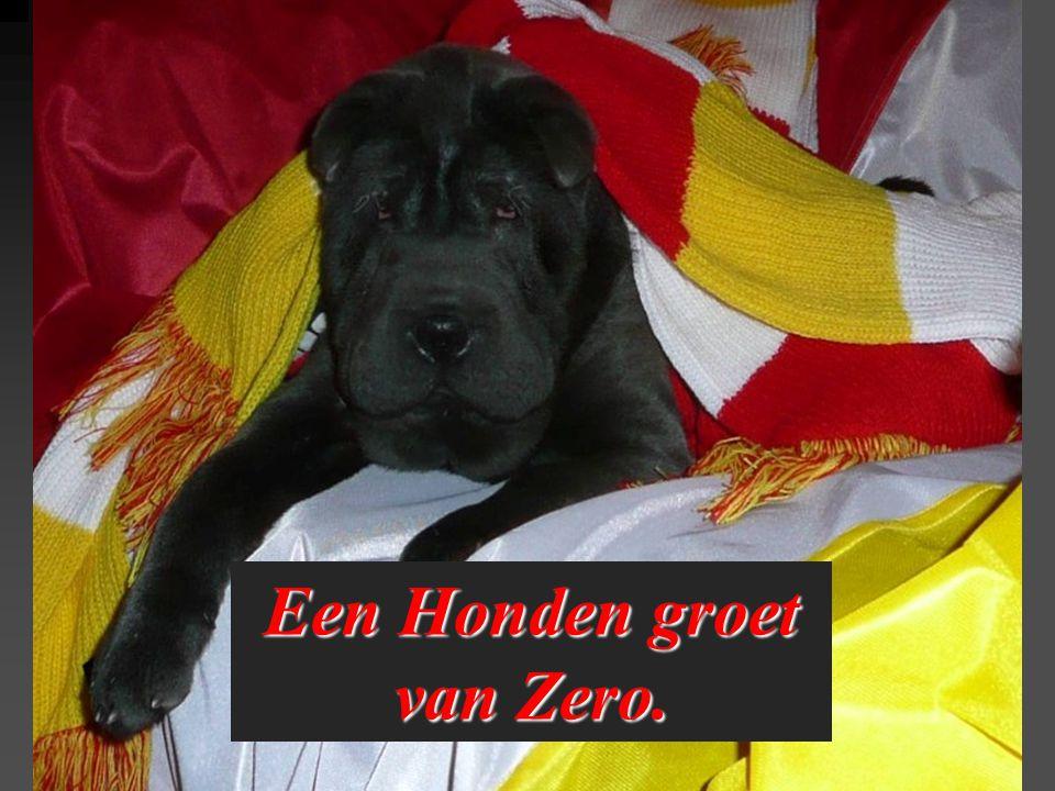 Een Honden groet van Zero.