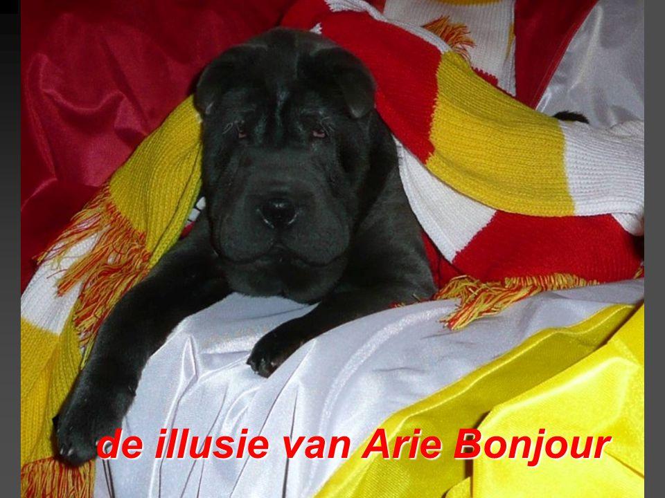 de illusie van Arie Bonjour