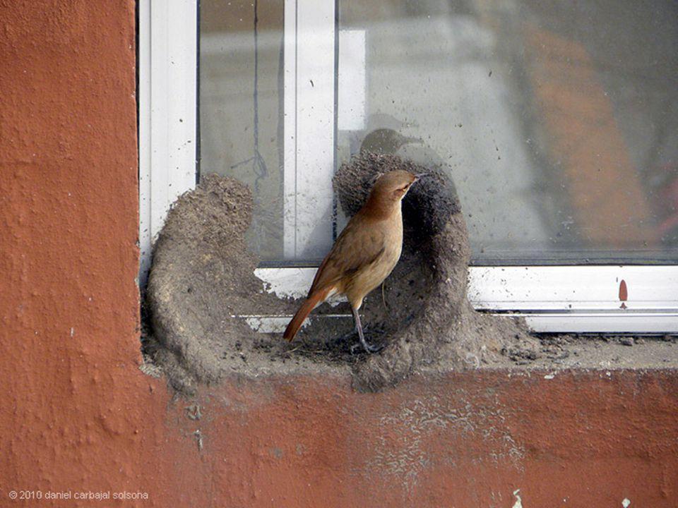 Het maken van een nest kijk hoe dat zij het doen !
