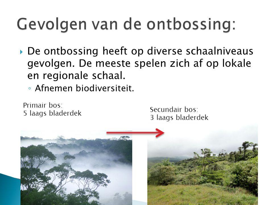  De ontbossing heeft op diverse schaalniveaus gevolgen. De meeste spelen zich af op lokale en regionale schaal. ◦ Afnemen biodiversiteit. Primair bos