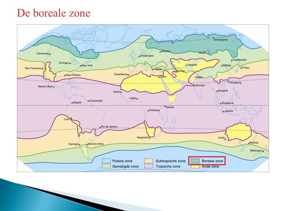De boreale zone