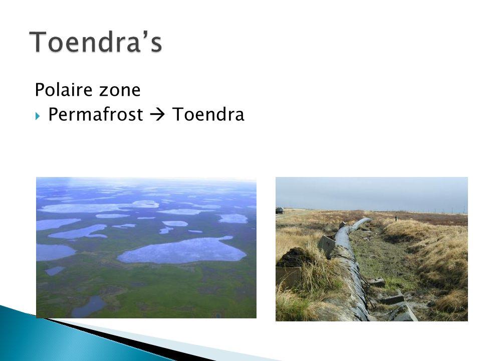 Polaire zone  Permafrost  Toendra