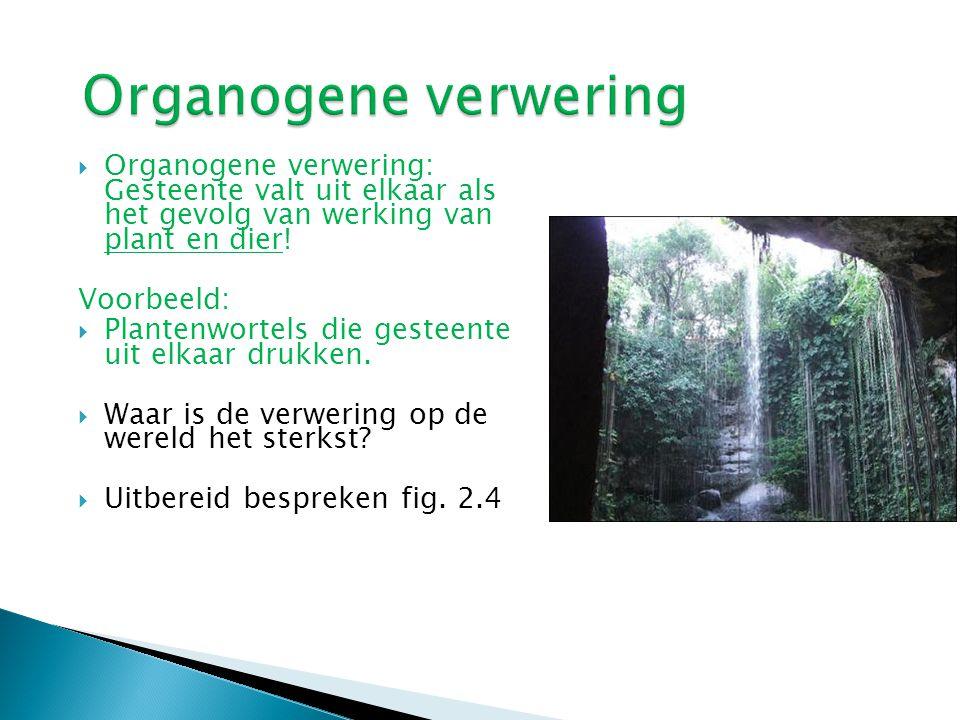  Organogene verwering: Gesteente valt uit elkaar als het gevolg van werking van plant en dier! Voorbeeld:  Plantenwortels die gesteente uit elkaar d
