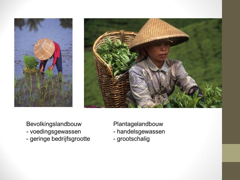 Rijst Rijstteelt: Arbeidsintensief Gebrekkig oogstmethoden Vaak zelfvoorzienend en binnenlandse markt.