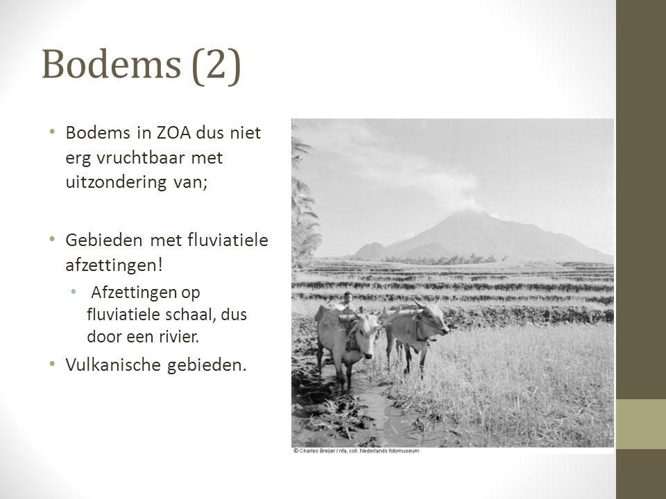 Bodems (2) Bodems in ZOA dus niet erg vruchtbaar met uitzondering van; Gebieden met fluviatiele afzettingen! Afzettingen op fluviatiele schaal, dus do
