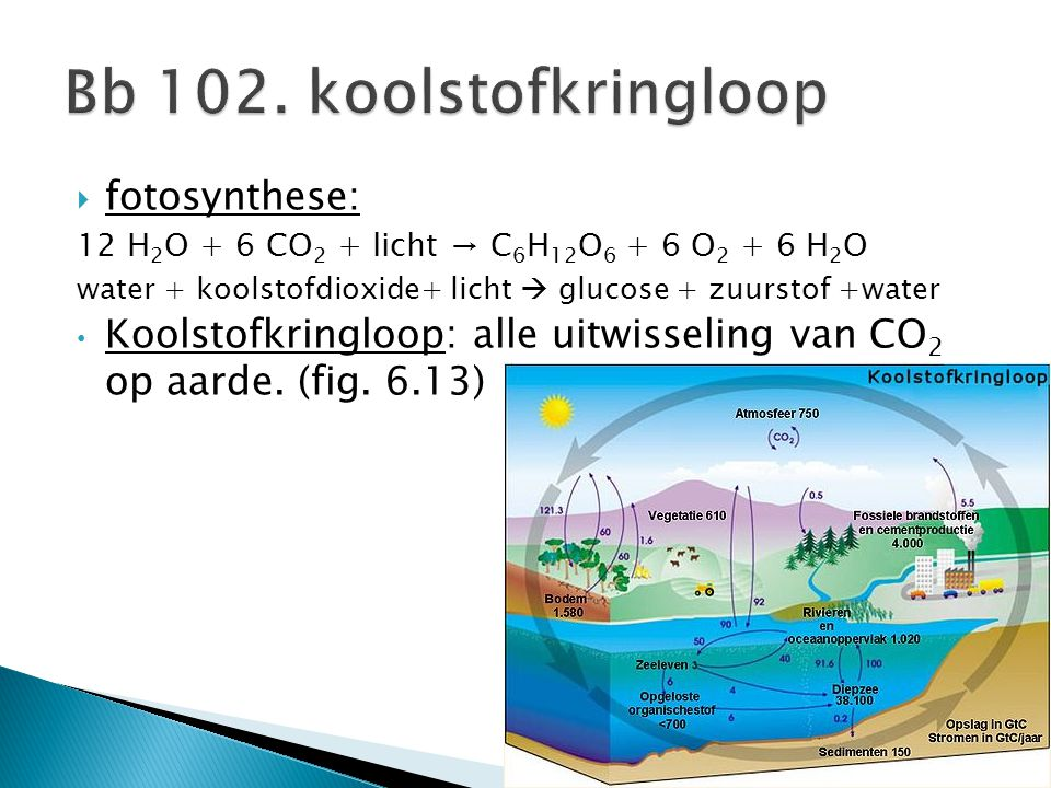  fotosynthese: 12 H 2 O + 6 CO 2 + licht → C 6 H 12 O 6 + 6 O 2 + 6 H 2 O water + koolstofdioxide+ licht  glucose + zuurstof +water Koolstofkringloo